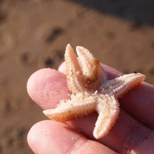 Estrelas do mar sobre os dedos de uma pessoa.